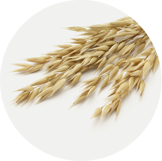 Picture of oat grains